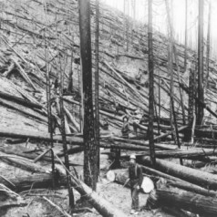 Historical Logging in the Pacific Northwest