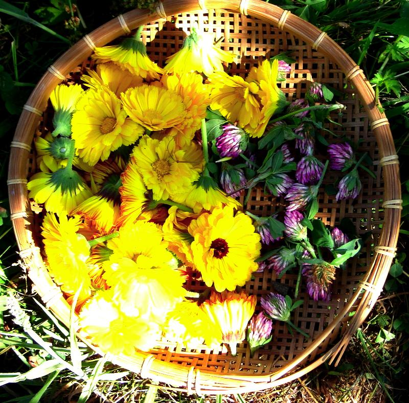 Calendula-Red Clover in Basket