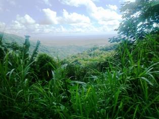 El Yunque & Caribbean