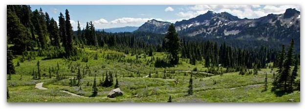 Rainier Meadows