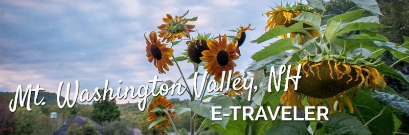 E-Traveler Header-sunflowers