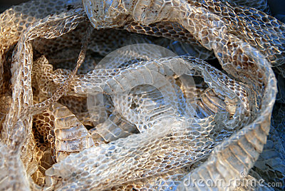 Shedding Snake, Dreamstime