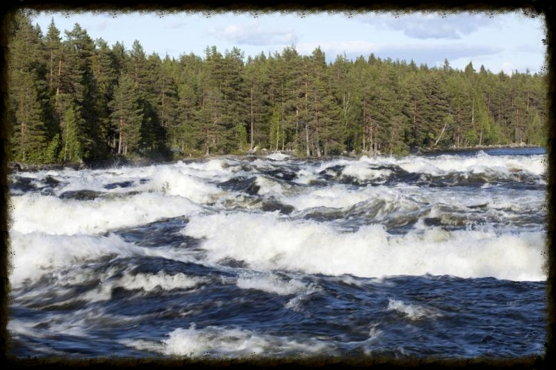 Springtime flood in a river. Rapids in motion.