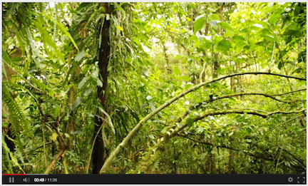 Costa Rica Movie