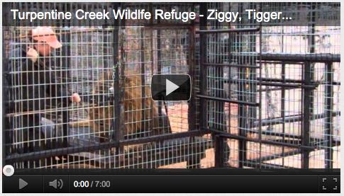 Ziggy, Tigger G, and Brody get Habitat