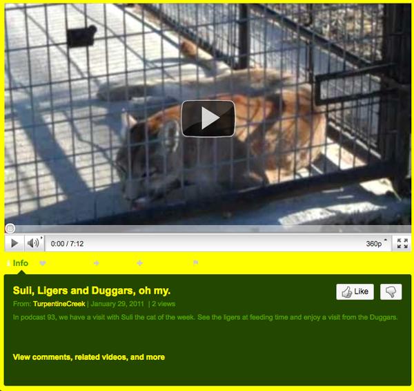 Video of Cat of The Week plus Duggars Visit