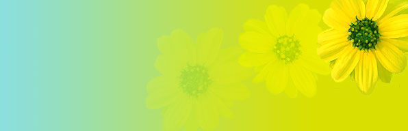 yellow-fade-flowers-header.jpg