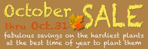 October Sale Banner