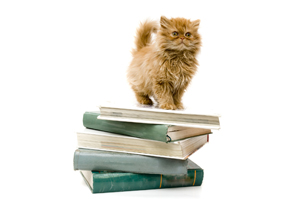 Cat on Books