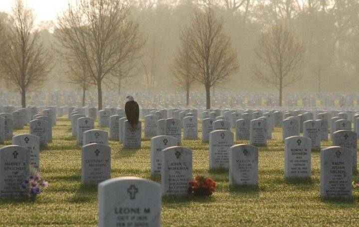 eagle in cemetary