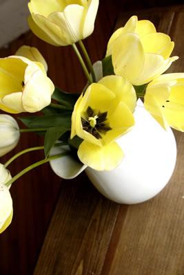 yellow-pitcher-flowers.jpg