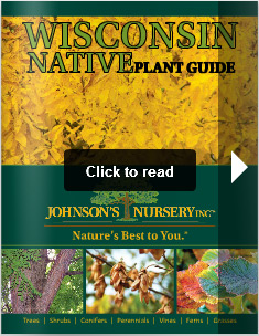 Wisconsin Native Plant Guide