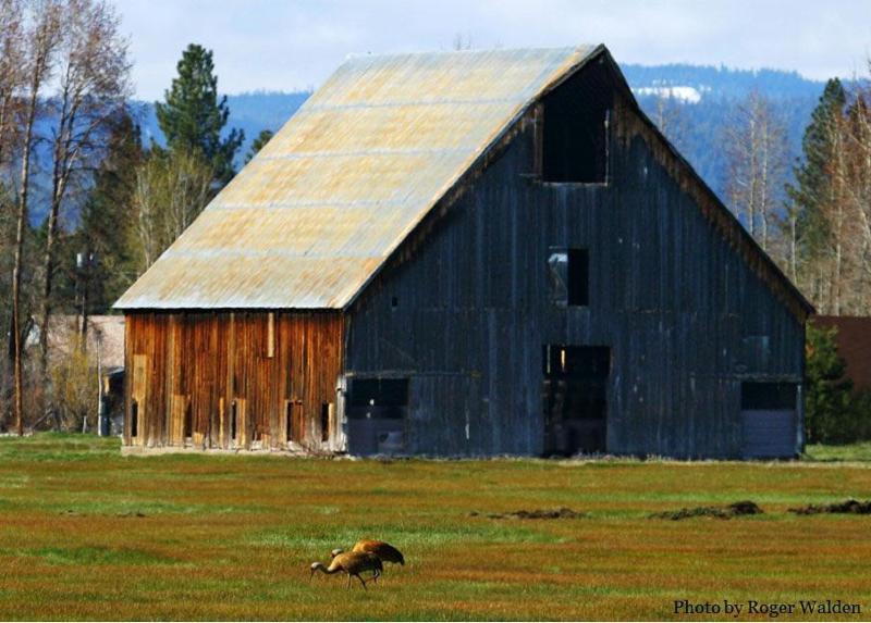 Olsen barn and cranes