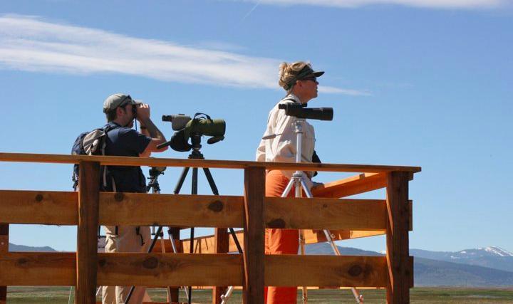 Birders in Sierra Valley on birding platform.