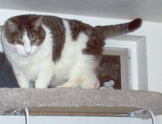 scout cat