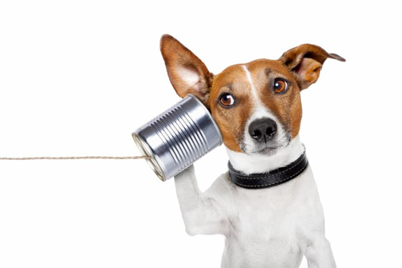 dog on the phone with a can