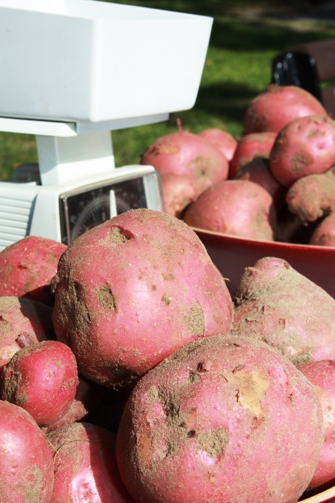 Farm Days - Potatoes