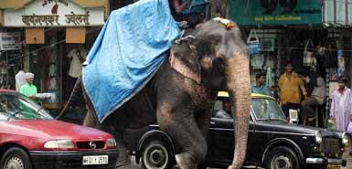 elephant india 1