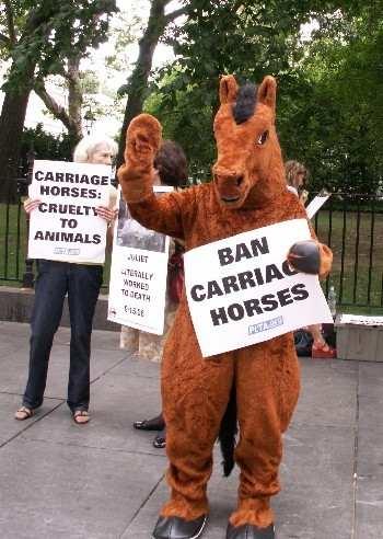 horse in constume