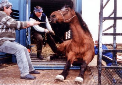 horse pulled