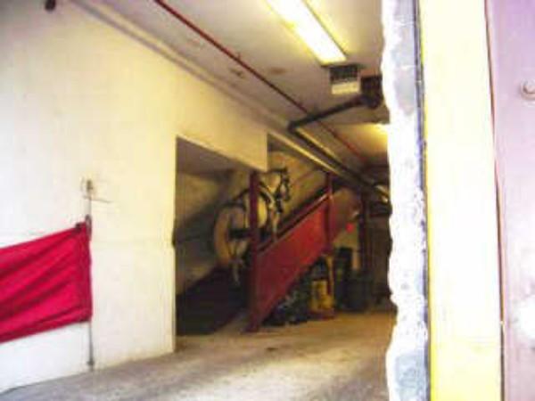 horse on ramp