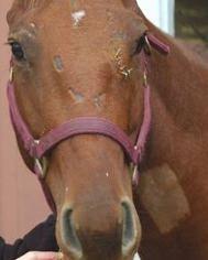 CRASH HORSE 1