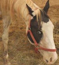 CRASH HORSE 3