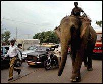 elephant - india 2
