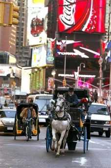 carriage horse in Times Sq.