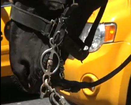 horse chains