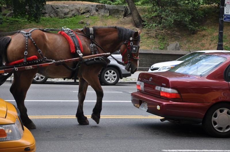 carriage horse in traffic