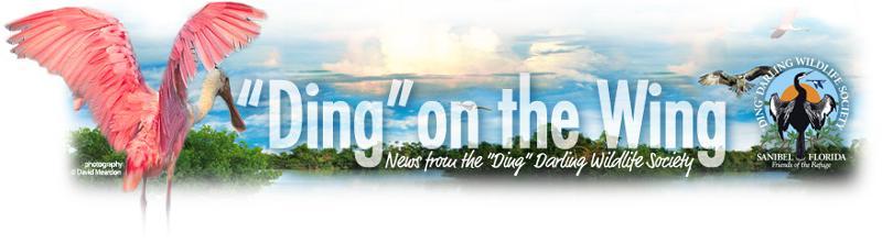 DingonWing banner