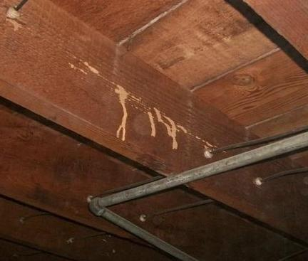 Termite Tubes indicate infestation
