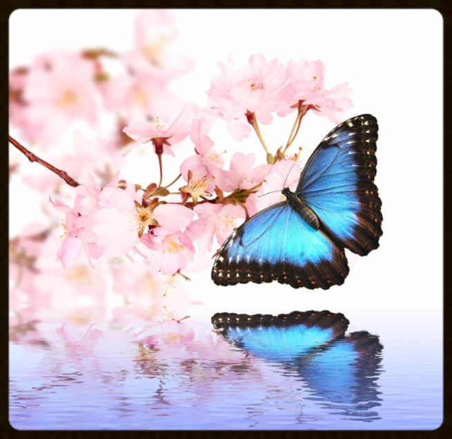 spring_blossoms_butterfly.jpg