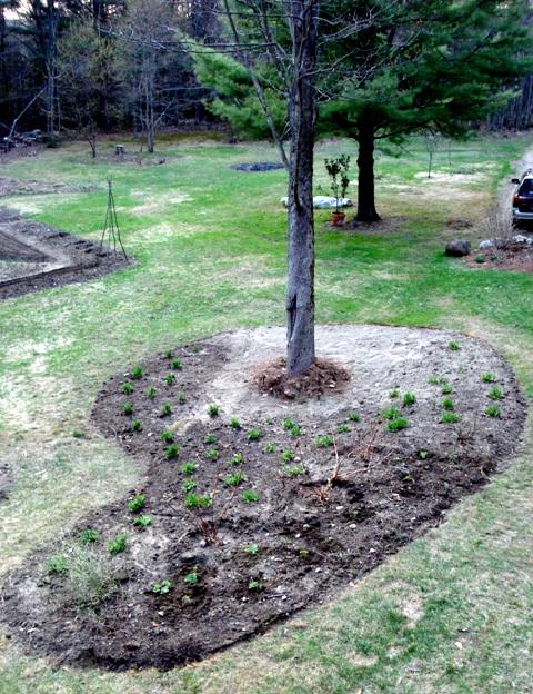 Under Tree Planting