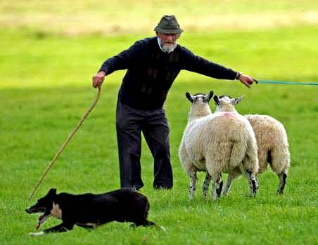 shepherd and dog, zimbio.com