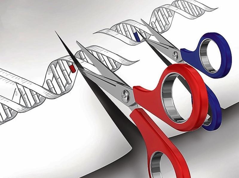 genome editing_ news.mit.edu