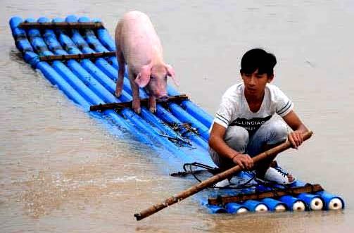 pig, man on raft,