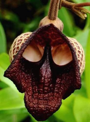 weird plant, sunnyscope.com