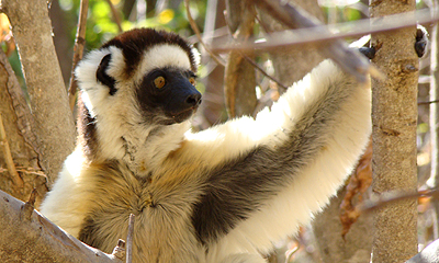 See Lemurs on a trekking holiday in Madagascar