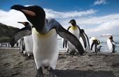 15% discount on Polar Cruises