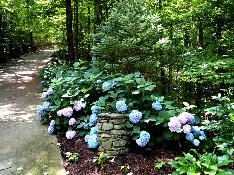 The Road to Heaven is paved with Hydrangea's