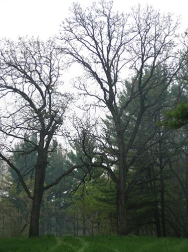Dyer Lake Trees