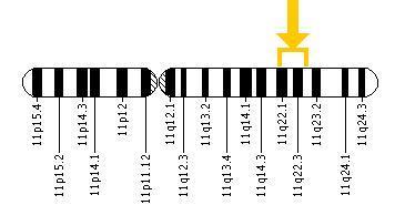 11q chromosome