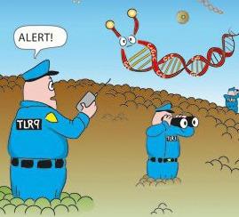 toll-like-receptor