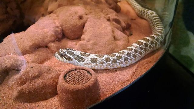 Repticon Columbia Reptile & Exotic Animal Show Returns Next Week
