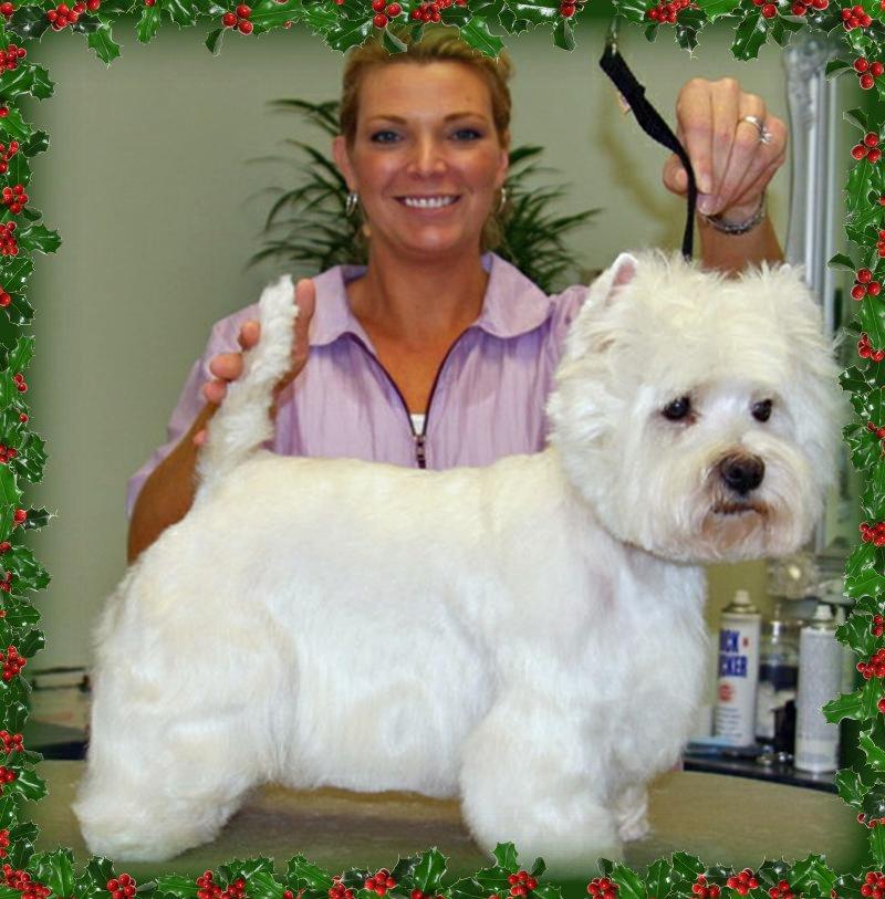 Melissa S Dog Grooming
