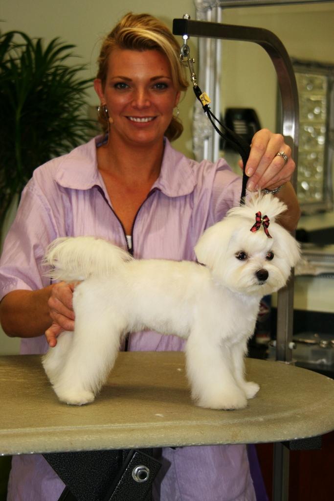 Cut And Run Dog Grooming