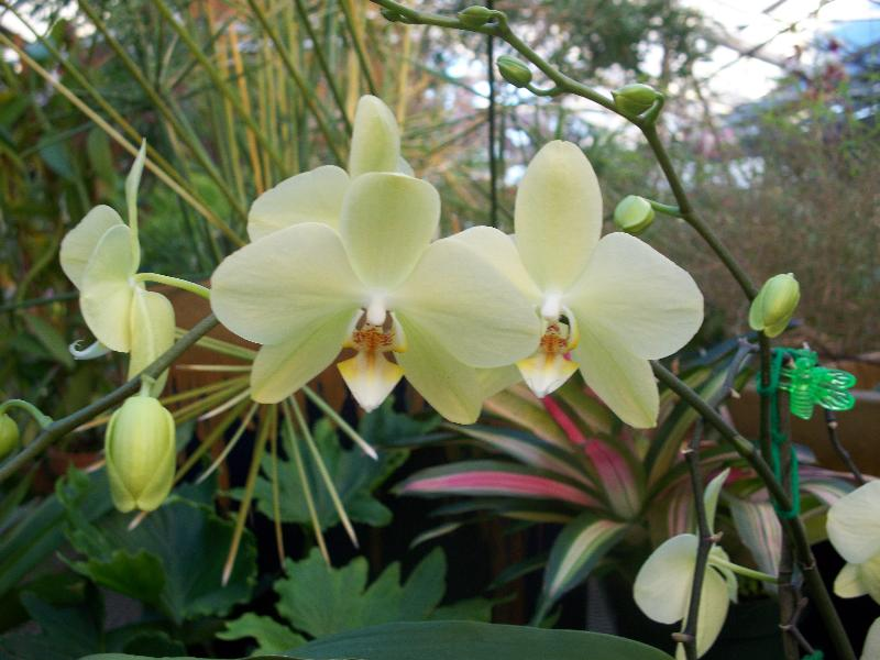 Join us for our annual orchid show!