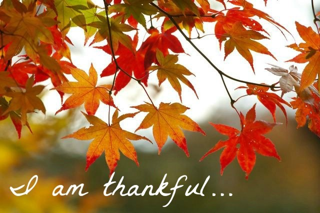 Fall leaves on a tree that are red with the words I am thankful under the leaves